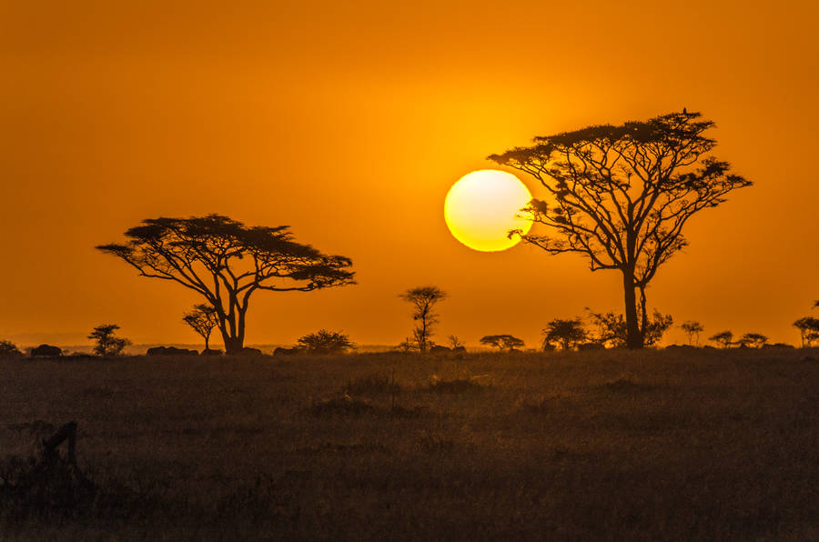 Beauty African Photography by Johan Georget Amazing African Trip Photography by Johan Georget