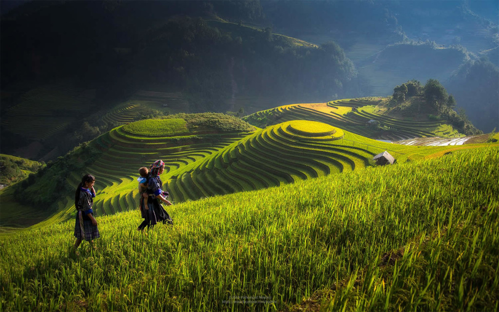 Beauty Vietnam Rice Terrace Photos by Sarawut Intarob 1024x640 Beautiful Vietnam Rice Terrace Photos by Sarawut Intarob