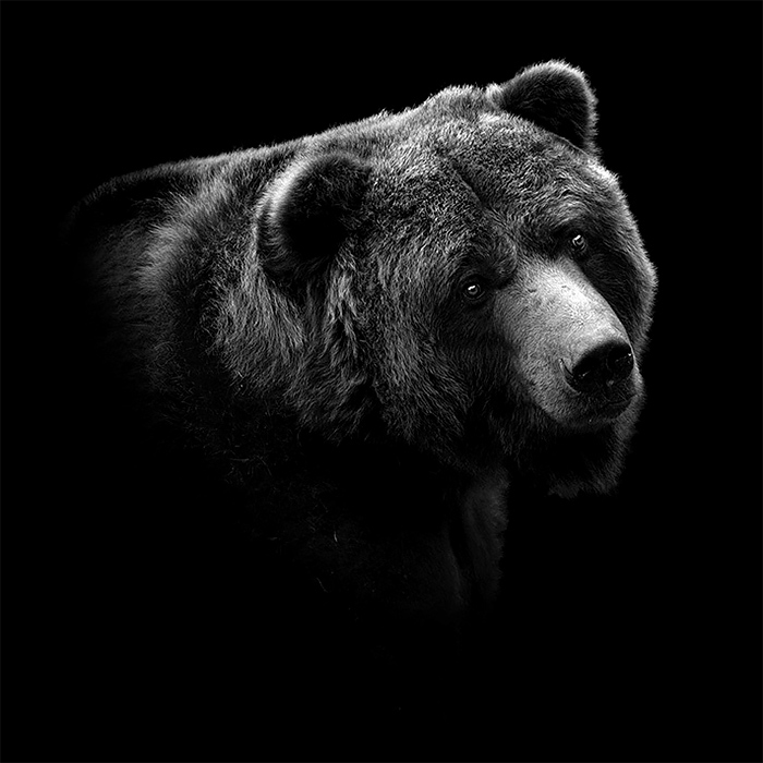 Best Monochrome Animal Photography by lukas holas Brilliant Monochrome Animal Photography by Lukas Holas