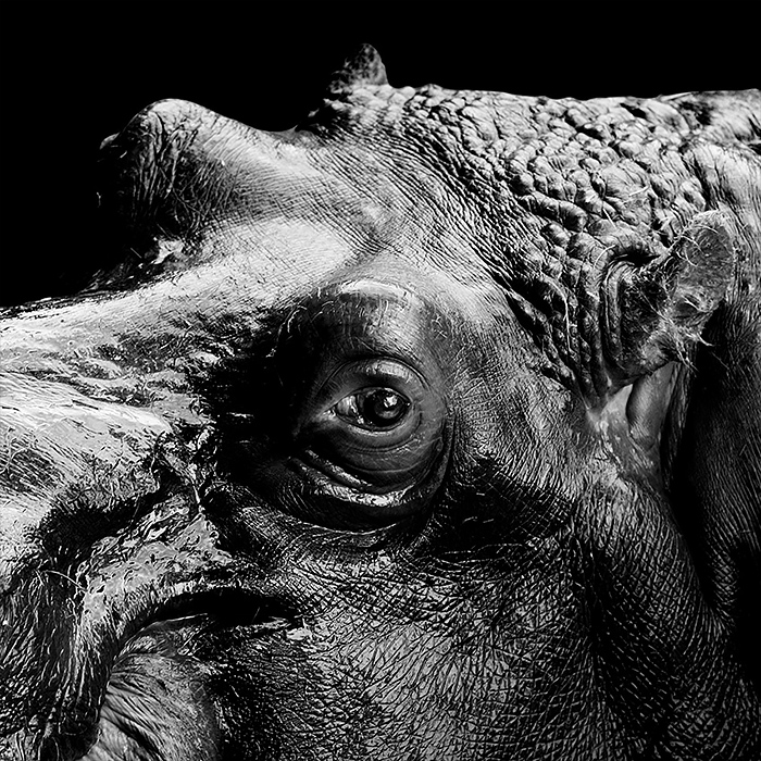 Black and white Animal Photography by lukas holas Brilliant Monochrome Animal Photography by Lukas Holas