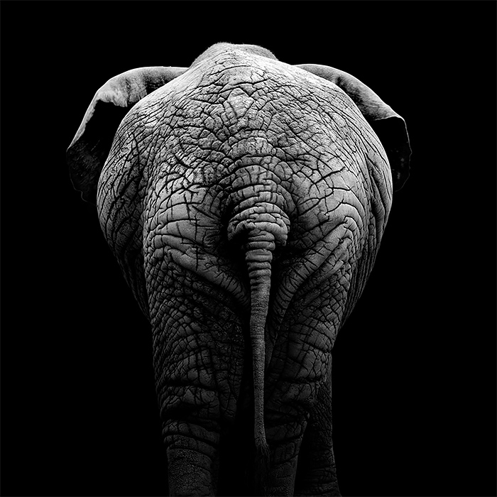 Brilliant Monochrome Animal Photography by lukas holas 02 Brilliant Monochrome Animal Photography by Lukas Holas