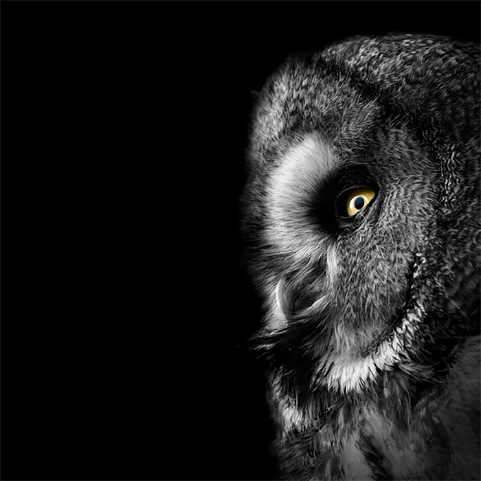 Brilliant Monochrome Animal Photography by lukas holas 03 Brilliant Monochrome Animal Photography by Lukas Holas