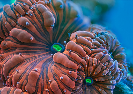 The Exotic Corals And Sponges Photography by Daniel Stoupin