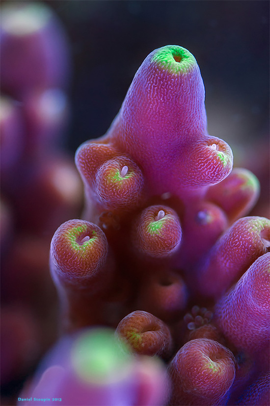 Detaile Corals And Sponges Photography by Daniel Stoupin The Exotic Corals And Sponges Photography by Daniel Stoupin