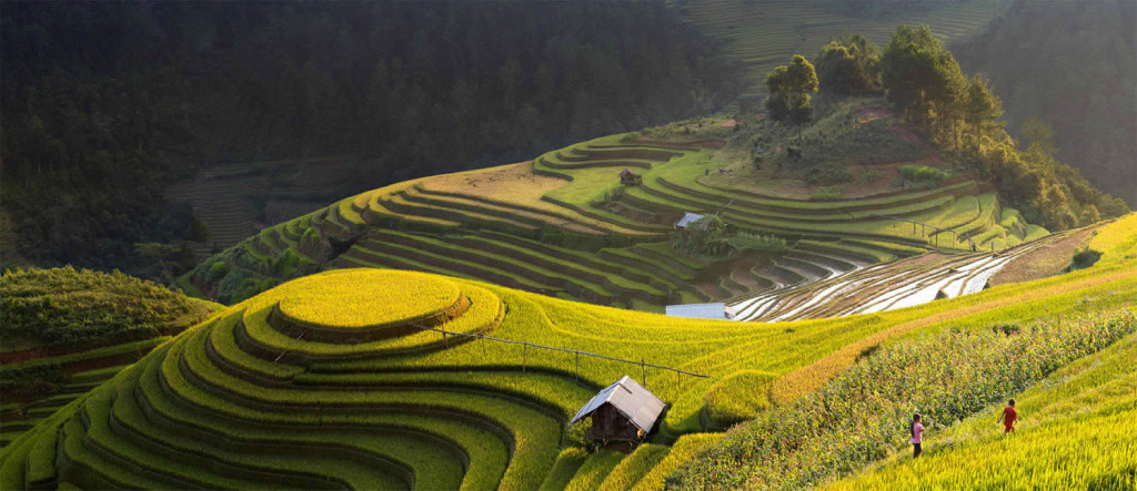 Gorgeous Vietnam Rice Terrace Photos by Sarawut Intarob 01 1024x443 Beautiful Vietnam Rice Terrace Photos by Sarawut Intarob
