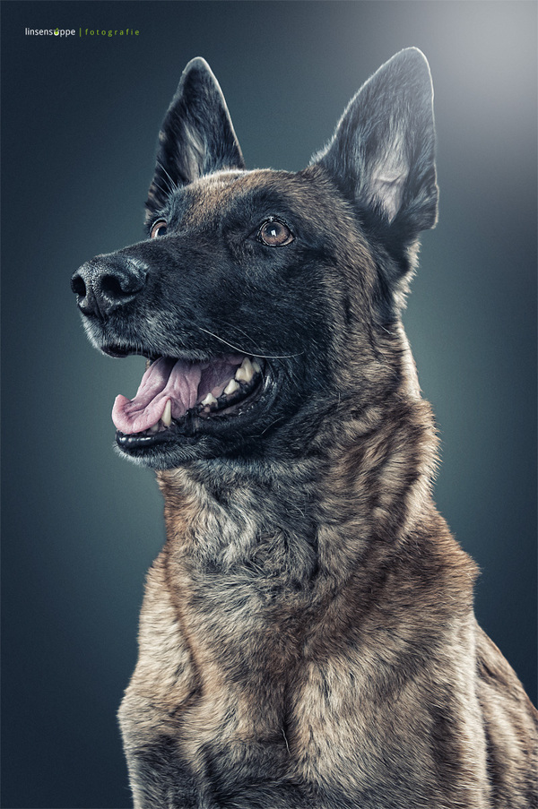 Best Dog Portraits Photography by Daniel Sadlowski Elegant Dog Portraits Photography by Daniel Sadlowski