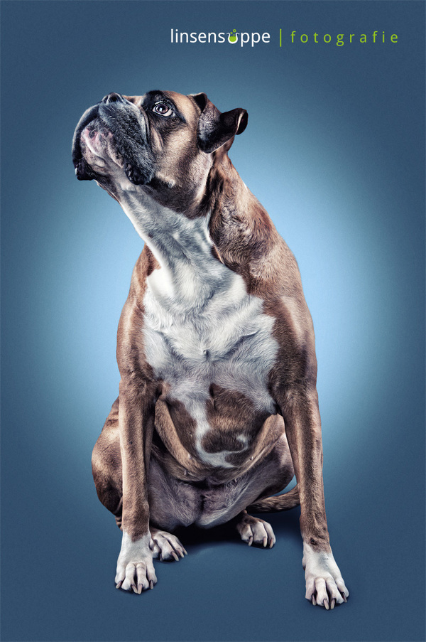 Cute Dog Portraits Photography by Daniel Sadlowski Elegant Dog Portraits Photography by Daniel Sadlowski