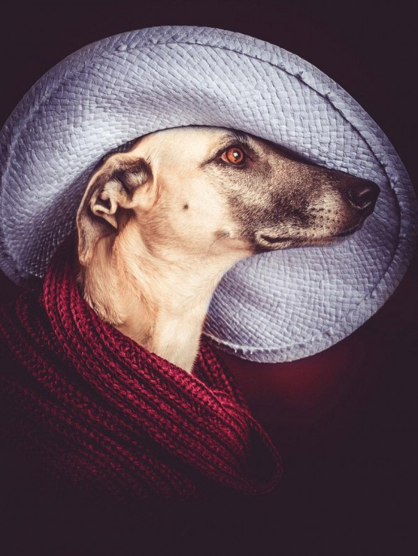 Cute Dogs portrait Photography poses elke vogelsang