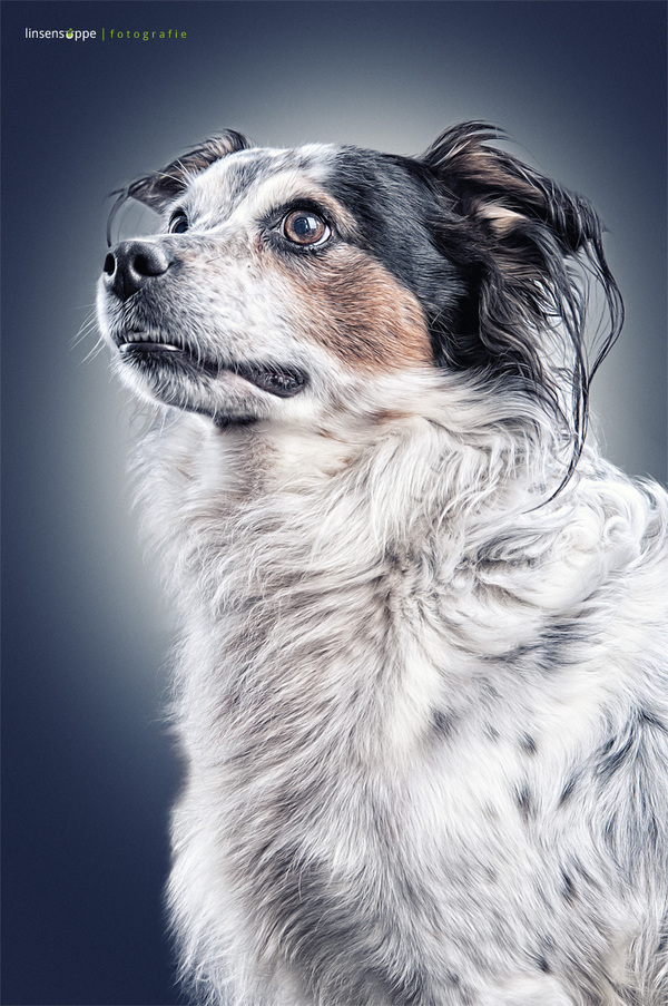 Dog Portraits Photography ideas by Daniel Sadlowski Elegant Dog Portraits Photography by Daniel Sadlowski