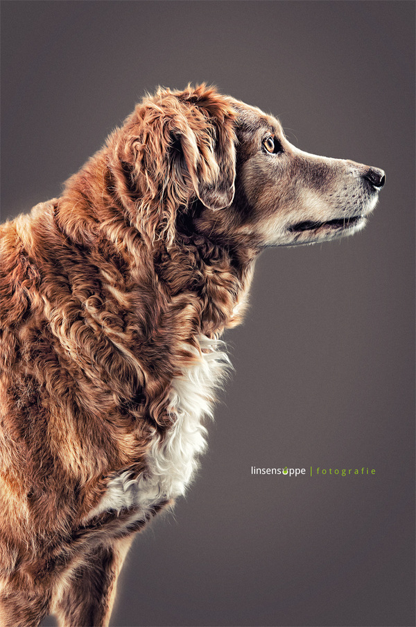 Elegant Dog Portraits Photography by Daniel Sadlowski 001 Elegant Dog Portraits Photography by Daniel Sadlowski