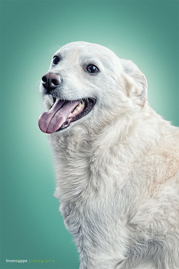 Elegant Dog Poses Photography by Daniel Sadlowski Elegant Dog Portraits Photography by Daniel Sadlowski