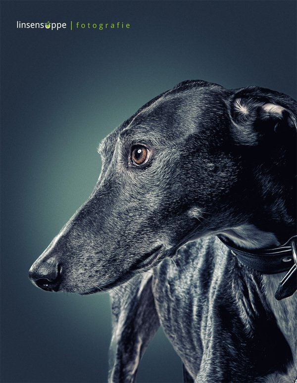Furry Dog Portraits Photography by Daniel Sadlowski Elegant Dog Portraits Photography by Daniel Sadlowski