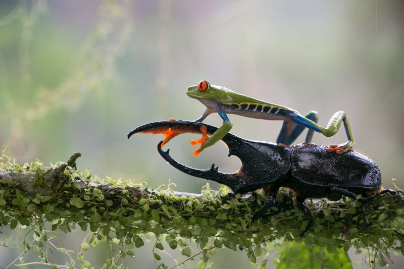 Beauty frog in lens by Nicolas Reusens Best Captured Photos of Frogs by Nicolas Reusens