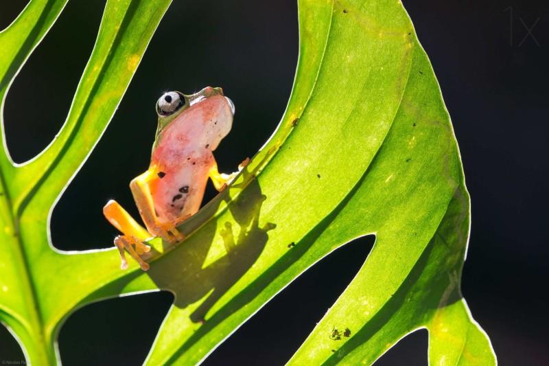 Beauty photos of frog by Nicolas Reusens Best Captured Photos of Frogs by Nicolas Reusens