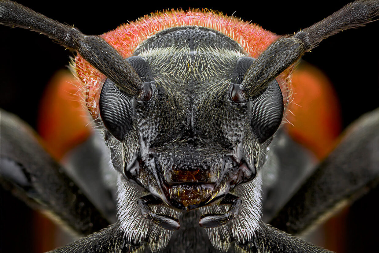 Image result for Extreme Macro Photography 2 by Paulo Latães
