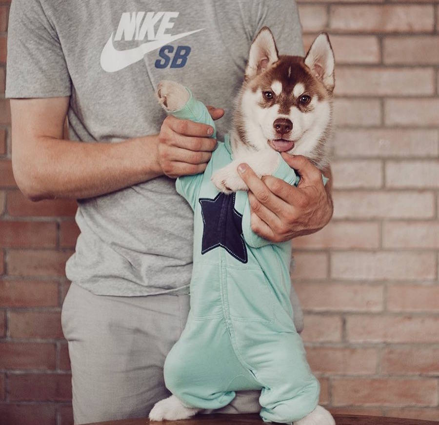 Huskies Photos with Human Clothes by Erica Tcogoeva Adorable Huskies Photo with Human Clothes by Erica Tcogoeva