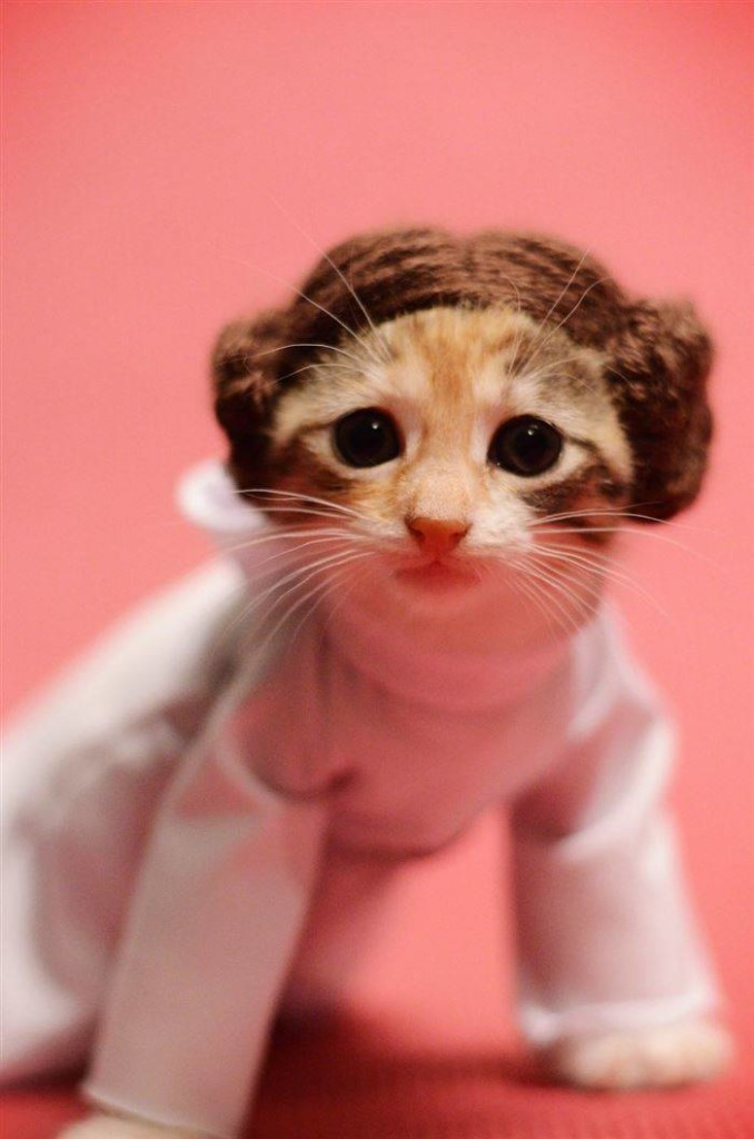 Creative Ideas: Combines Adorable Cats And Pop Culture For Awesome Photos!