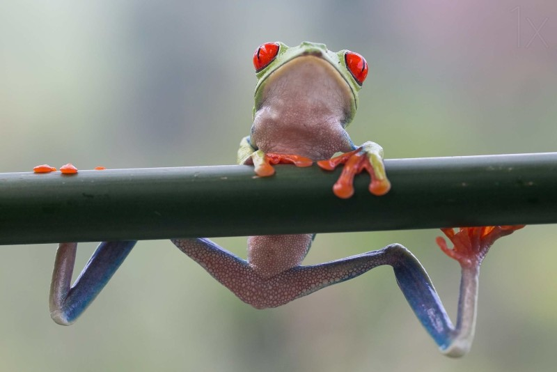 Macro frog photography Best Captured Photos of Frogs by Nicolas Reusens