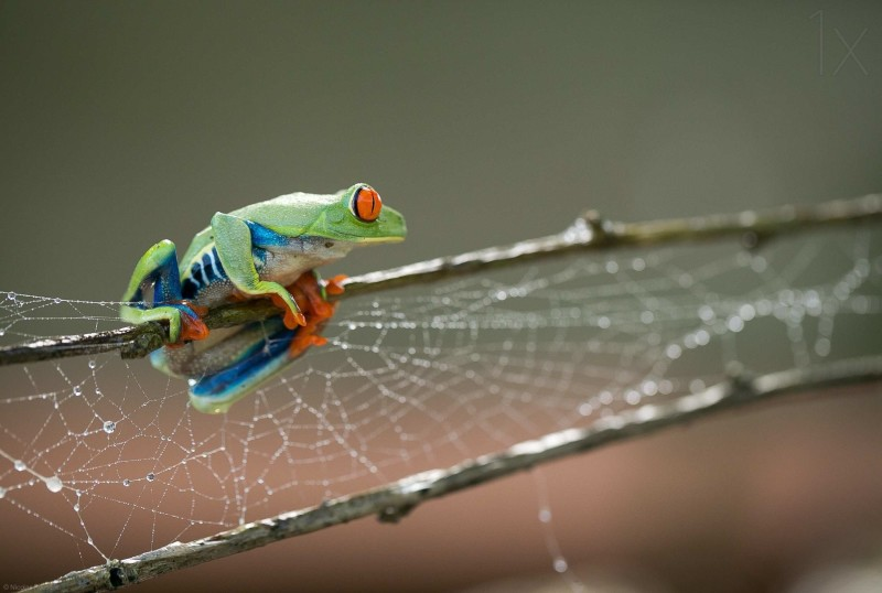 Macro photos of frog by Nicolas Reusens 071 Stunning Multiple Exposure Photography by Mohamed Reda