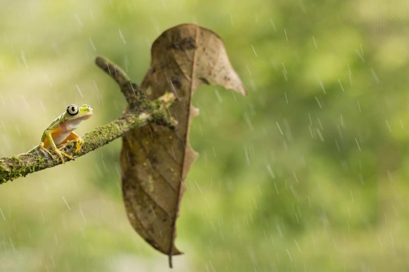 Macro photos of frog by Nicolas Reusens Best Captured Photos of Frogs by Nicolas Reusens