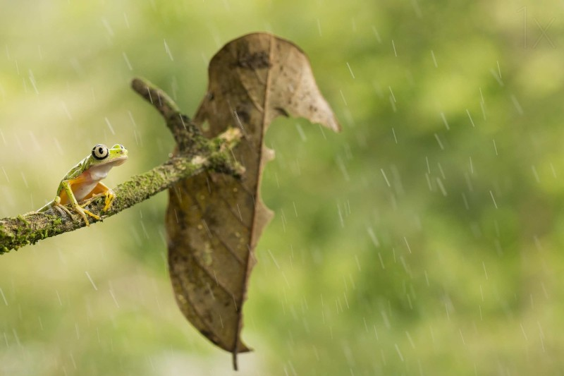 Macro photos of frog by Nicolas Reusens1 Stunning Multiple Exposure Photography by Mohamed Reda