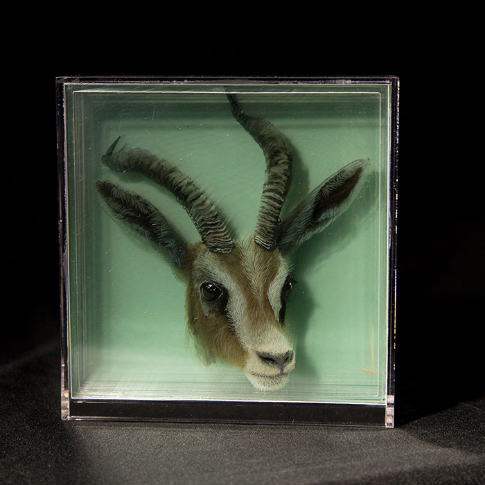 3D Paintings on Layers of Glass by Yosman Botero 02 3D Paintings of Animals on Layers of Glass by Yosman Botero