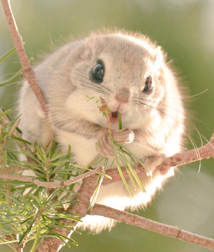 Adorable animals in the earth Flying Squirrels Are Probably The Cutest Animals On Earth