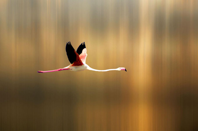 Amazing Bird Photography Wonderful Bird Photography – 25 Stunning Examples
