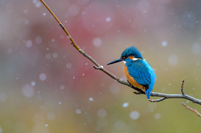 Beautiful Bird Photography Wonderful Bird Photography – 25 Stunning Examples