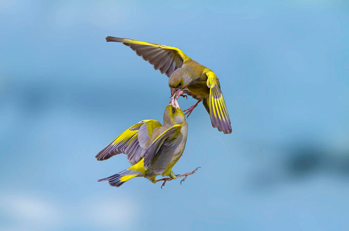 Beauty Bird Photography Wonderful Bird Photography – 25 Stunning Examples