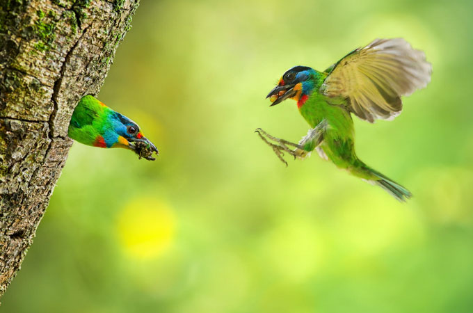 Wonderful Bird Photography – 25 Stunning Examples