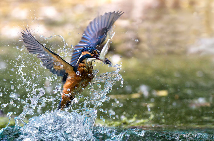 Best capture of bird photography Wonderful Bird Photography – 25 Stunning Examples