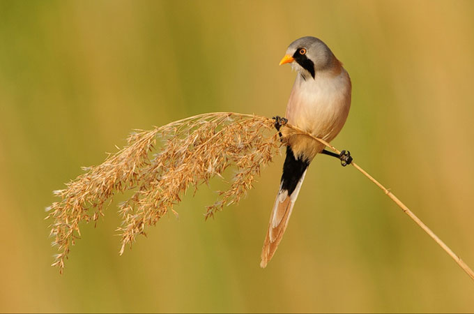 Best shoot of Bird Photography 03 Wonderful Bird Photography – 25 Stunning Examples