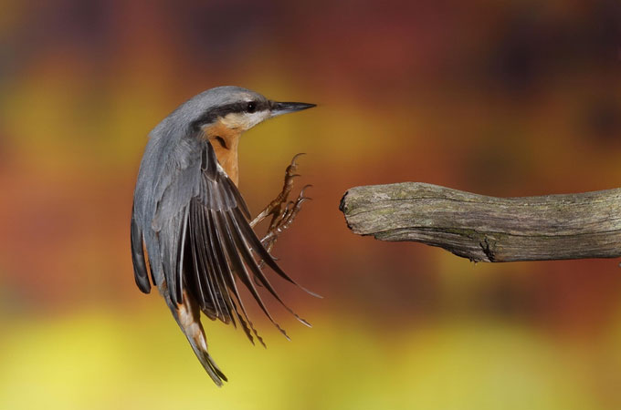 Best shoot of Bird Photography Wonderful Bird Photography – 25 Stunning Examples