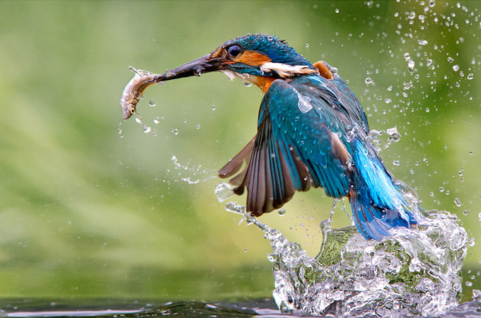 Wonderful Bird Photography examples 01 Wonderful Bird Photography – 25 Stunning Examples