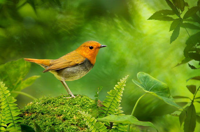 Wonderful Bird Photography examples Wonderful Bird Photography – 25 Stunning Examples