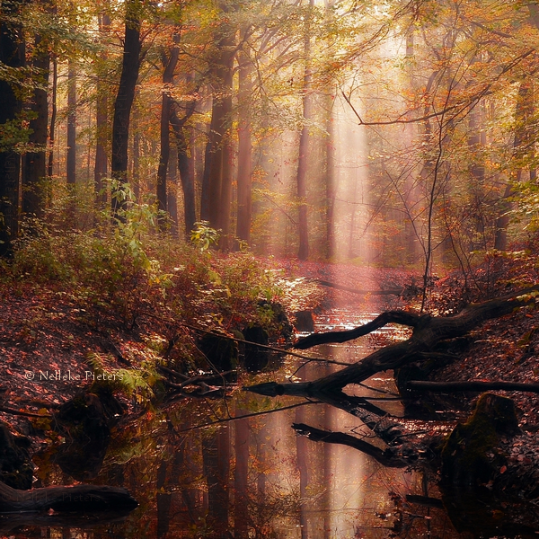 Best Forest Photography by Nelleke Pieters Most Beautiful Forest Photography by Nelleke Pieters