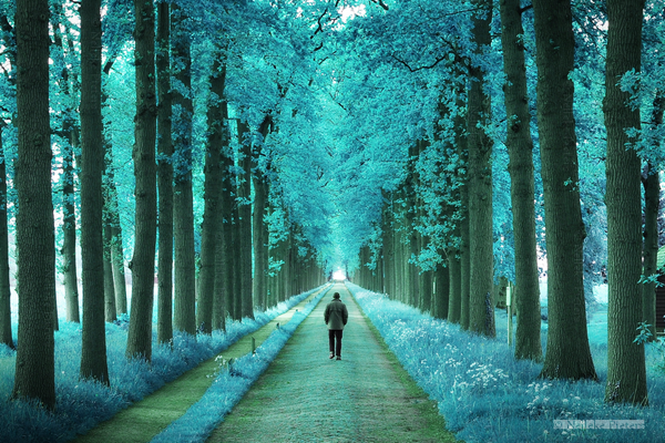 Blue Forest Photography by Nelleke Pieters Most Beautiful Forest Photography by Nelleke Pieters