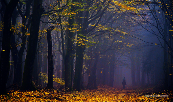 Forest Photography example Most Beautiful Forest Photography by Nelleke Pieters