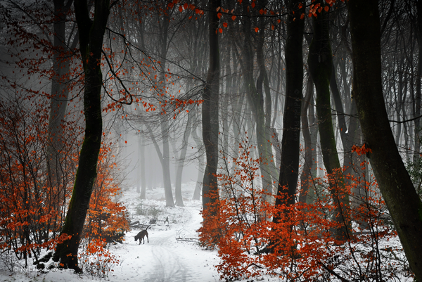 Magical Forest Photography by Nelleke Pieters 02 Most Beautiful Forest Photography by Nelleke Pieters