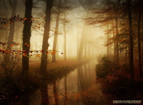 Magical Forest Photography by Nelleke Pieters 03 Most Beautiful Forest Photography by Nelleke Pieters