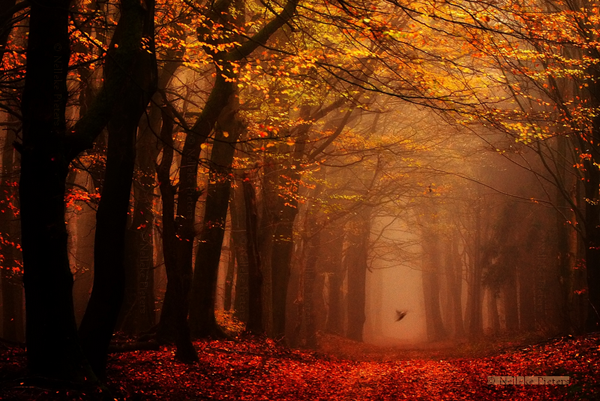 Magical Forest Photography by Nelleke Pieters 04 Most Beautiful Forest Photography by Nelleke Pieters