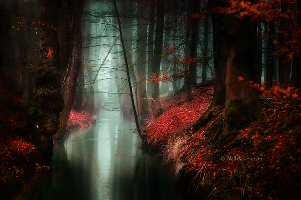 Magical Forest Photography by Nelleke Pieters 05 Most Beautiful Forest Photography by Nelleke Pieters