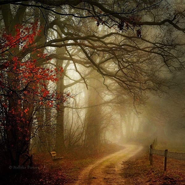 Magical Forest Photography by Nelleke Pieters 06 Most Beautiful Forest Photography by Nelleke Pieters