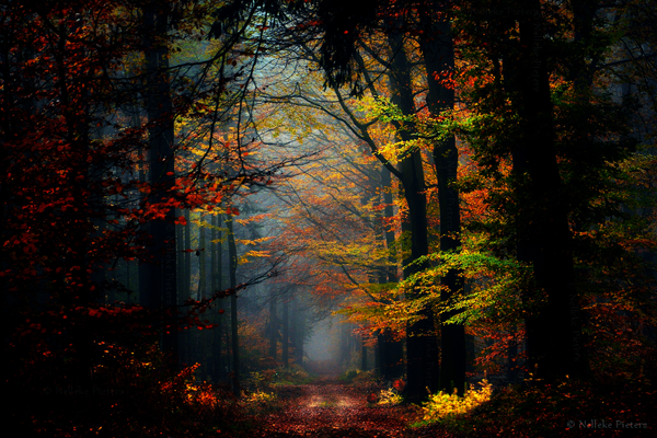 Mind blowing Forest Photography by Nelleke Pieters Most Beautiful Forest Photography by Nelleke Pieters