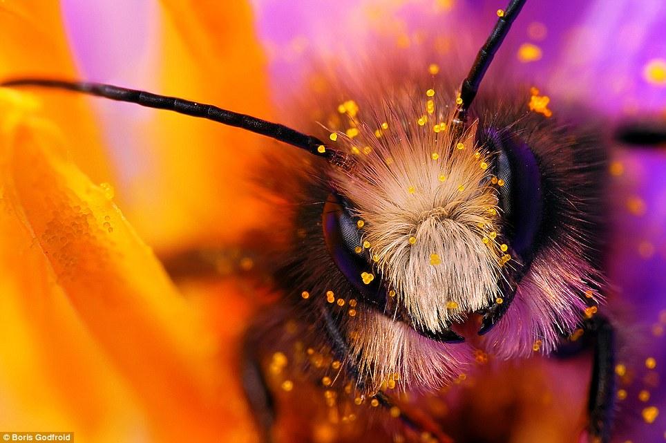 Stunning macro photography of bee Best Capturing Macro Photography of Bee