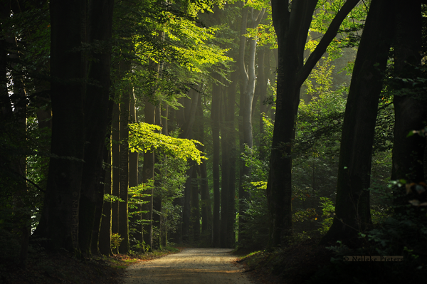 Wonderful Forest Photography by Nelleke Pieters Most Beautiful Forest Photography by Nelleke Pieters