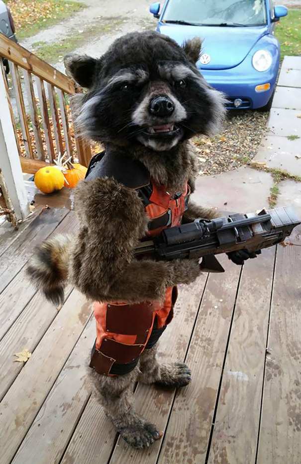 rocket raccoon costume diy mom halloween chase borchardt Mom's Costume Creation Goes Viral 'Guardians of the Galaxy'