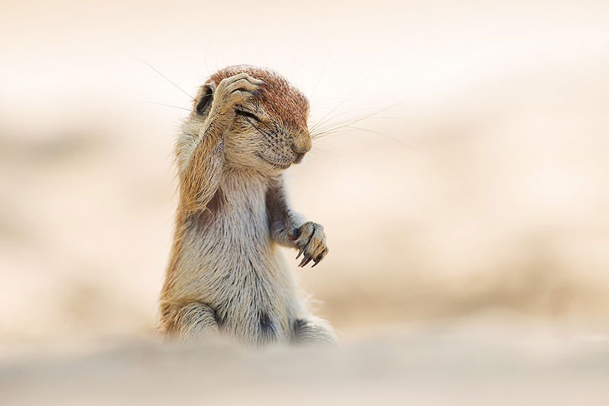 Funny Winners of the Comedy Wildlife Photography Awards 2015 02 13 Funny Winners of the Comedy Wildlife Photography Awards 2015