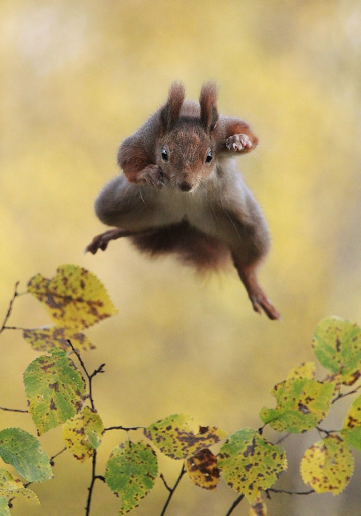 Funny Winners of the Comedy Wildlife Photography Awards 2015 05 716x1024 13 Funny Winners of the Comedy Wildlife Photography Awards 2015